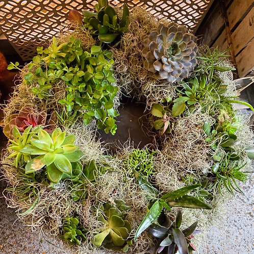 Large living succulent wreath