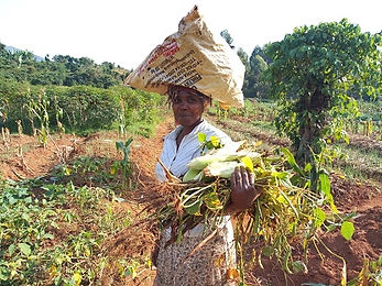 Woman after harvesting food from her garden.jpg