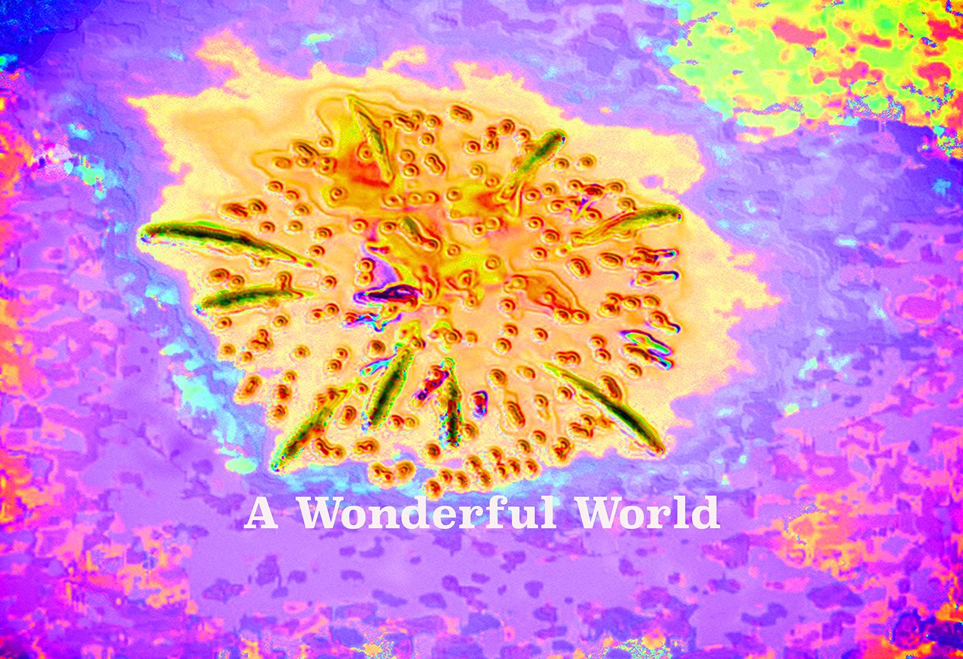 AG S1-049 A Wonderful World