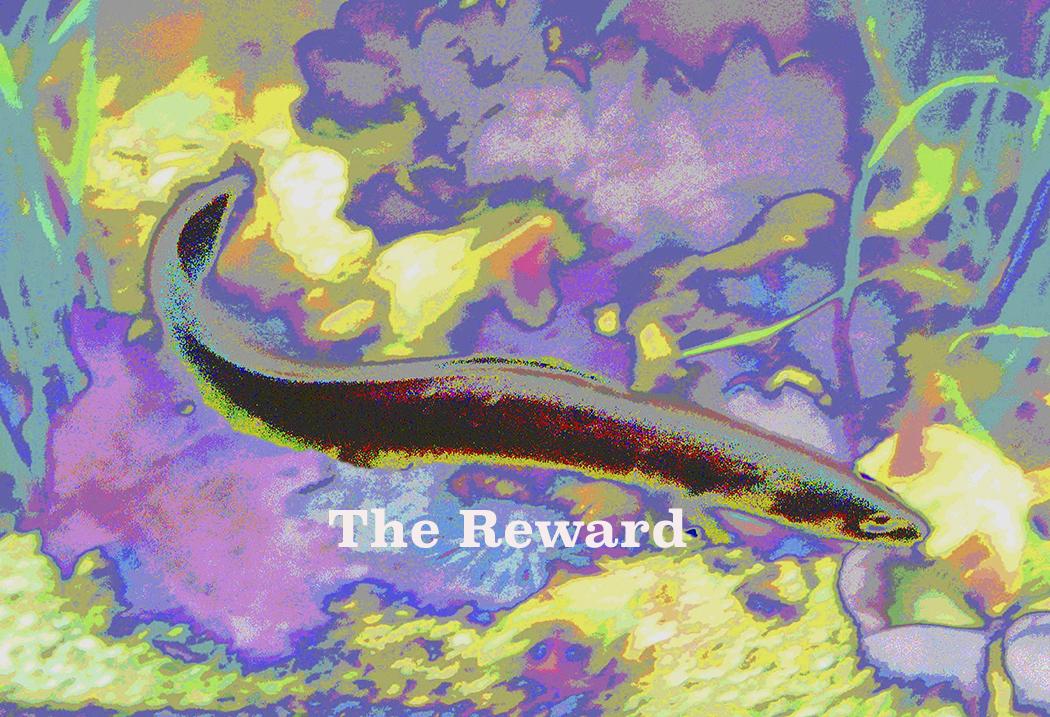 AG S1-044 The Reward