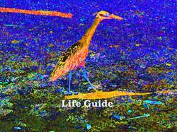 AG S1-042 Life Guide