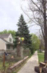Winnipeg Tree Service Arborist Tree Removal