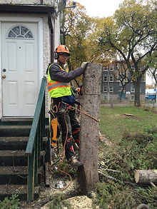 Winnipeg Tree Service