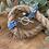 Thumbnail: Flora bleu