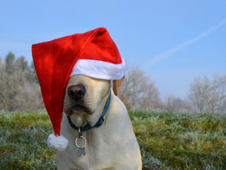 The 12 Blogs of Christmas: Day 9