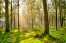 colors-daylight-environment-1005334