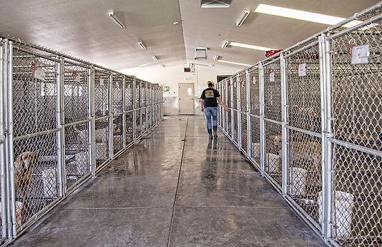 kennel-inside2.jpg