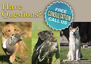 Can Your Dog Benefit From Training?