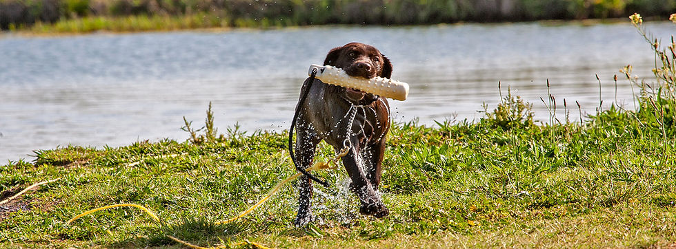 Puppy Head Start Training