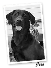 """Meghan's Testimonial About Her Hightest Black Lab """"Jess"""""""