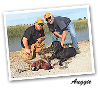 """Ed & Claire's Testimonial About Their Highest Black Lab """"Auggie."""""""