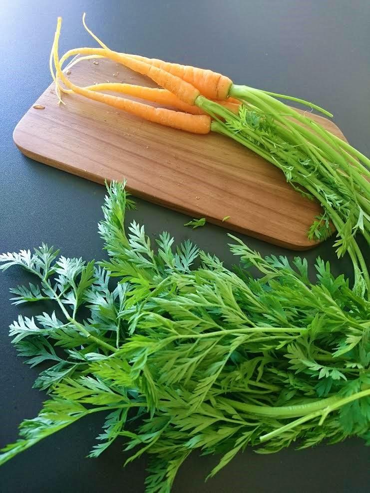 Hyödynnä varhaissadon porkkanoista myös mehukkaat naatit. Rapea salaatti. Kotimaiset kasvikset. Porkkanoiden naatti salaatissa.