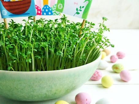 Syötävä pääsiäisruoho