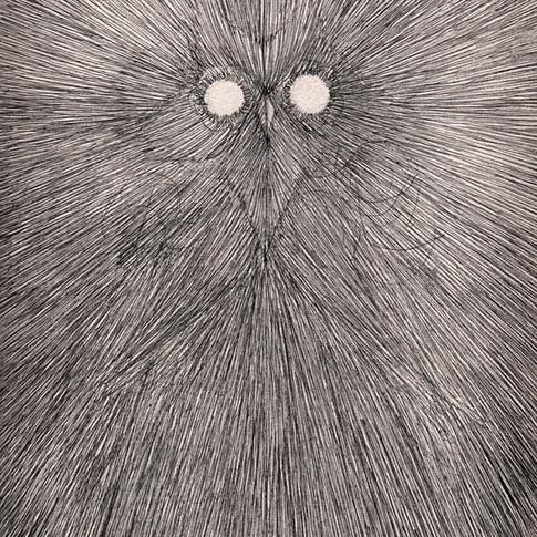 phosphorus owl sm.jpg