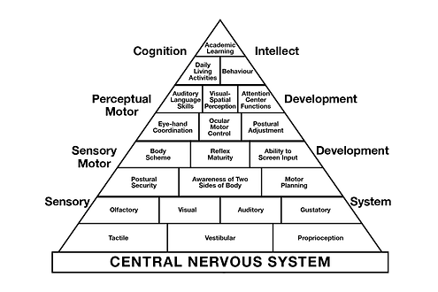 Development and the CNS diagram.png