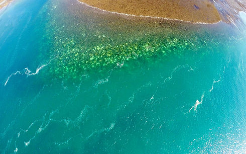 Title photo aerial view of bleaching - Steeve Comeau_edited.jpg