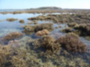 P1050301_exposed_corals2.JPG