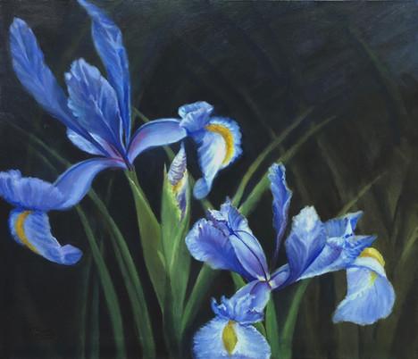 """Irises, 28"""" x 24"""""""