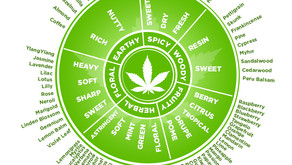 Cannabis Terpenes, What They Are