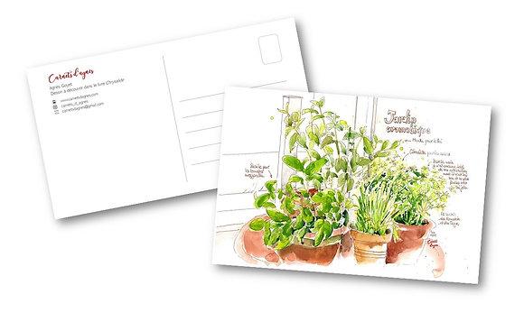 Carte postale - Plantes aromatiques