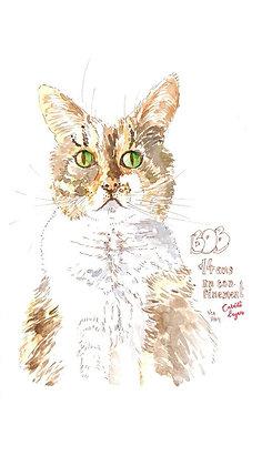Dessin - Grand chat