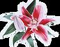 Çiçekçi Kız