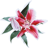 Niña de las flores