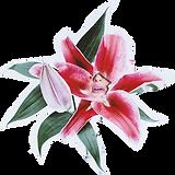 Blomsterjente