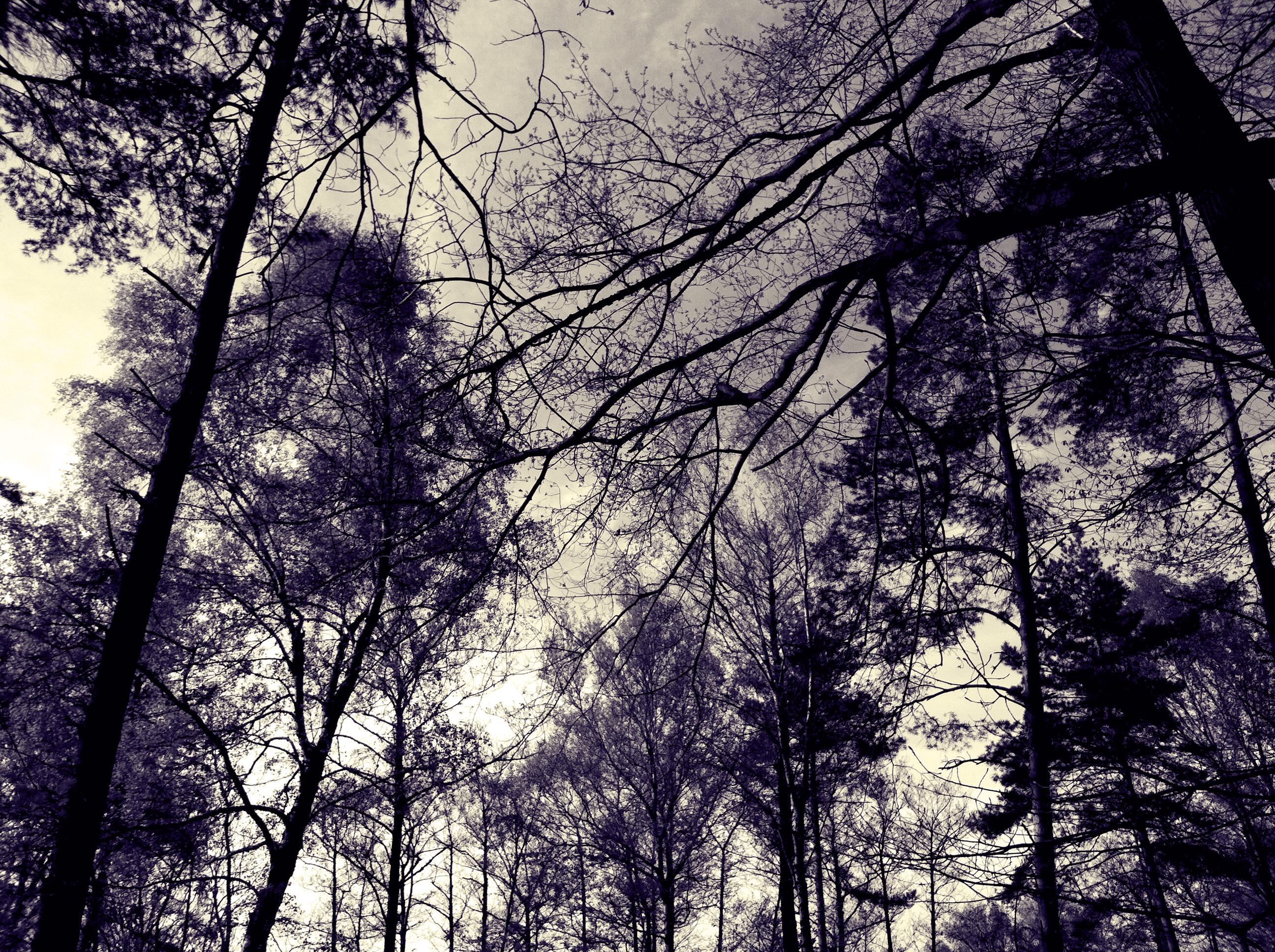 TREES 04:14