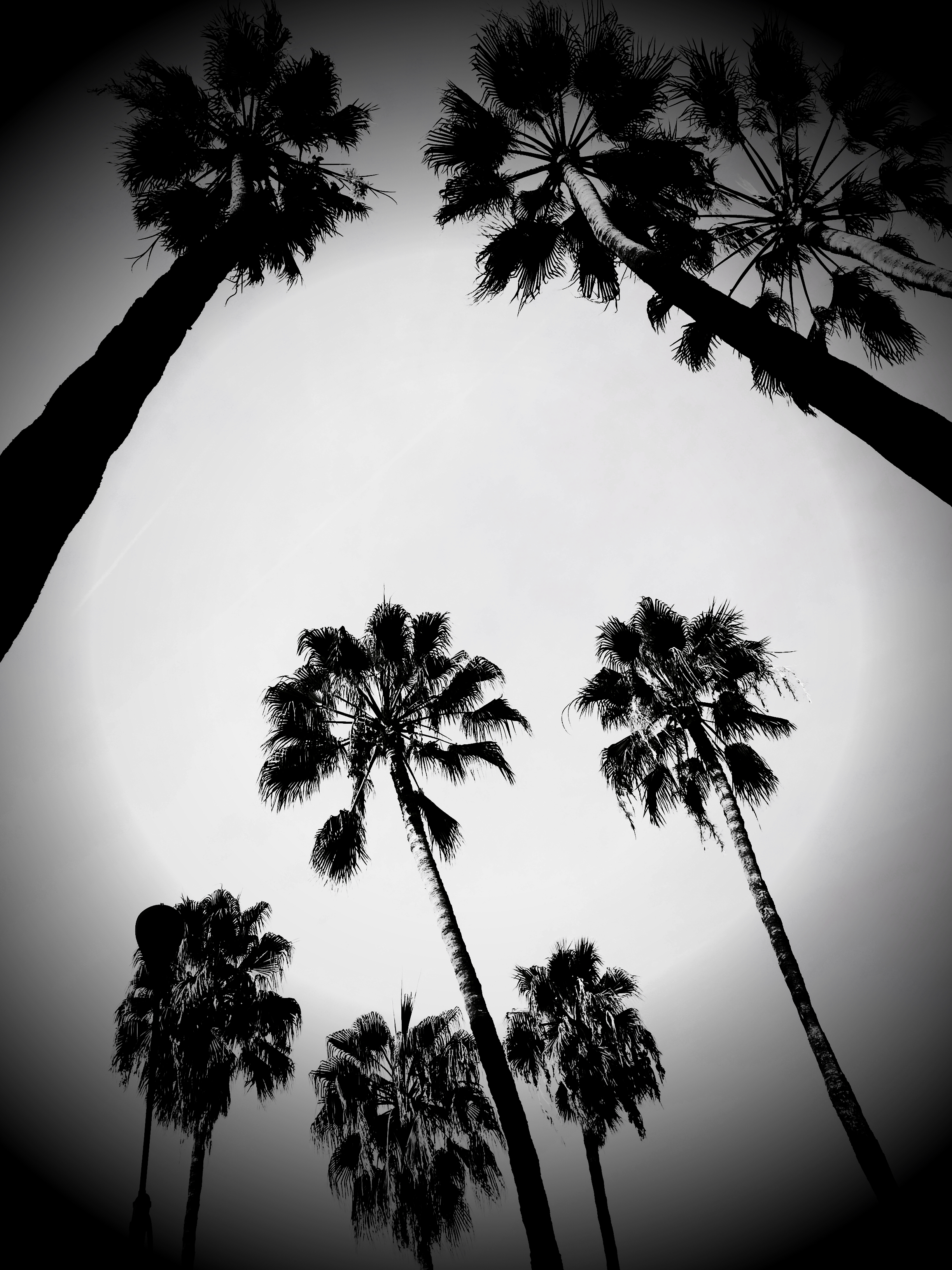 LOS ANGELES  10_15
