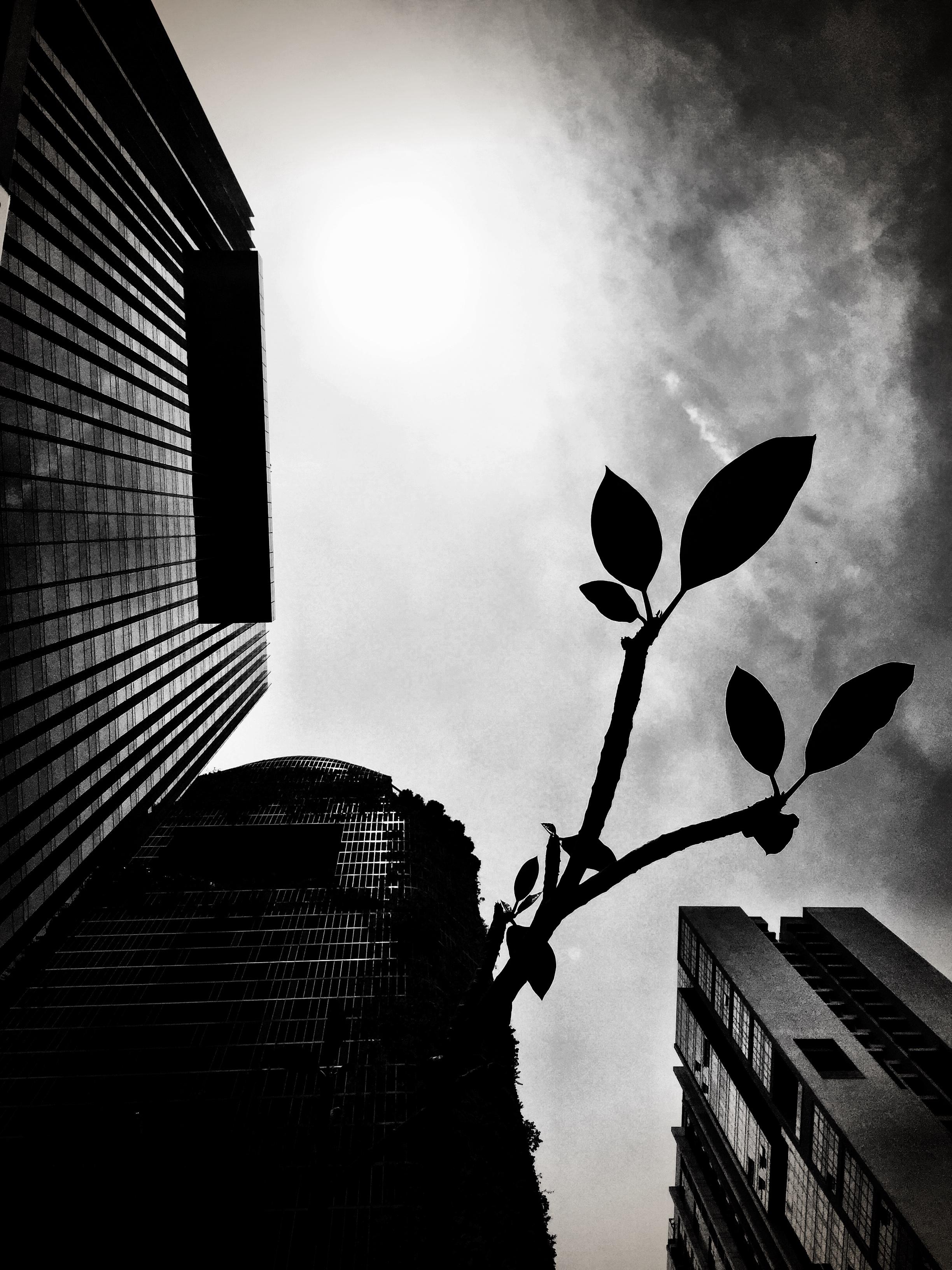 SINGAPORE 03_18