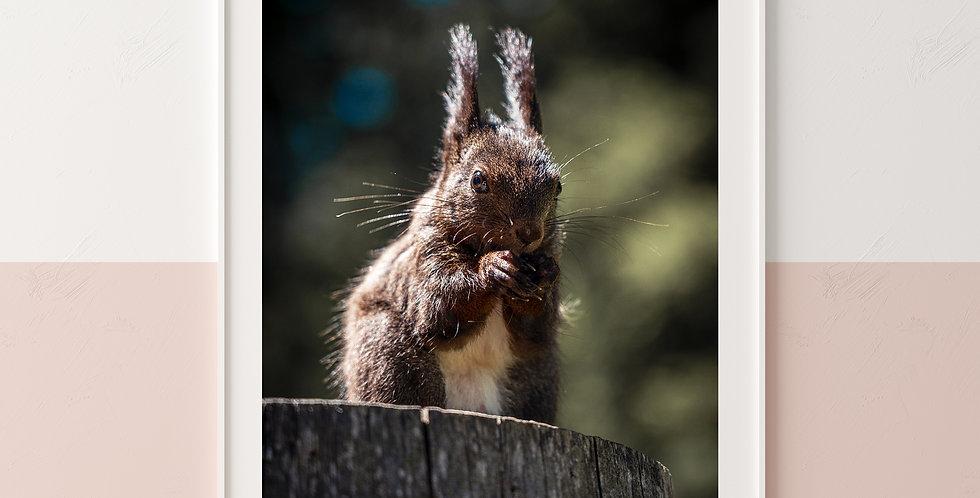 Sweet Squirrel Portrait