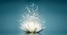 lotus fnl.jpg