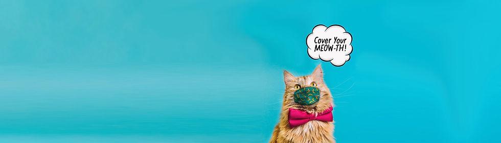blue-back-cat2web.jpg