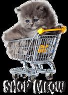little-kitten-on-white-background-persia