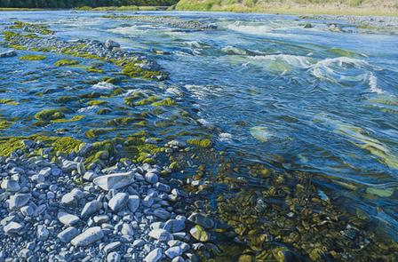 Bovine Waterways - Mark Cross