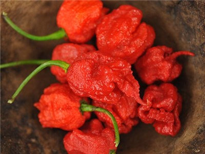 4 Seeds Packs Of the Hottest Peppers (see below)