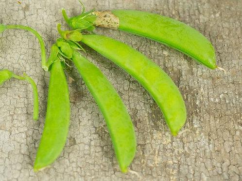 """Baker Creek Heirloom Seeds """"SUGAR SNAP PEA"""""""