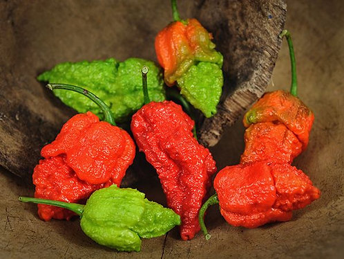 "Baker Creek Heirloom Seeds ""APOCALYPSE SCORPION HOT PEPPER"""