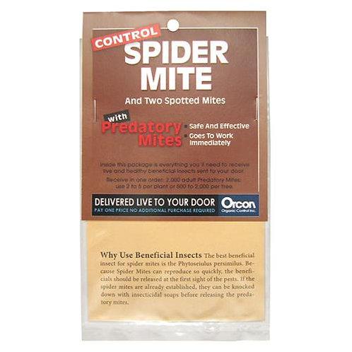 Spider Mite & Two Spotted Mites w/ Predatory Mites