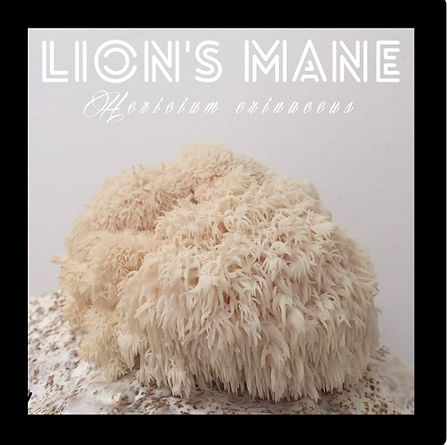 Lion's Mane Outdoor Mushroom Log Kit