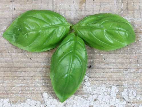 "Baker Creek Heirloom Seeds ""GENOVESE BASIL"""