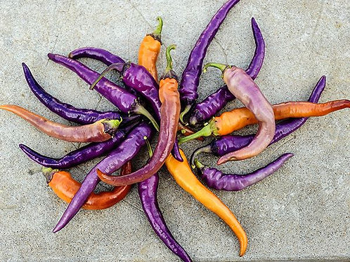 "Baker Creek Heirloom Seeds ""BUENA MULATA HOT PEPPER"""