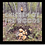 Thumbnail: Chicken Of The Woods Outdoor Mushroom Log Kit
