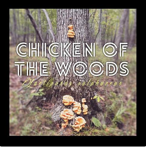 Chicken Of The Woods Outdoor Mushroom Log Kit