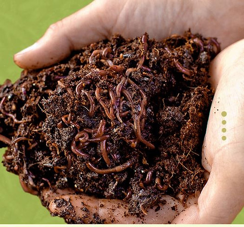 500 Red Composting Worm Mix