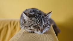 נדודי שינה - 6 טיפים מועילים