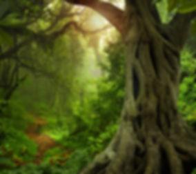 Asian tropical rainforest.jpg
