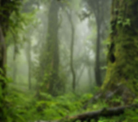 Nepal jungle.jpg