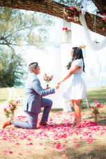 Flower Tree, Lanterns, Island Proposal, Gorgeous, Flower Draping, Daisys, Roses, Rose Petals, Marriage, Proposal, She Said Yes